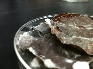 Lentinula edodes